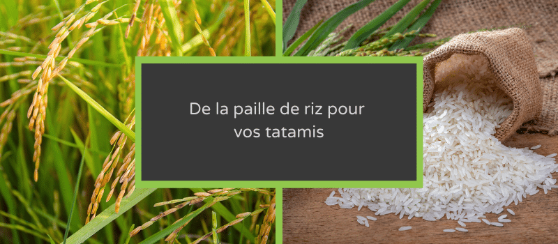 banner-nature-straw-rice
